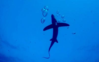 10 consigli per immergersi in sicurezza con gli squali